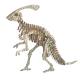 Bouwpakket Parasaurolophus klein- kleur